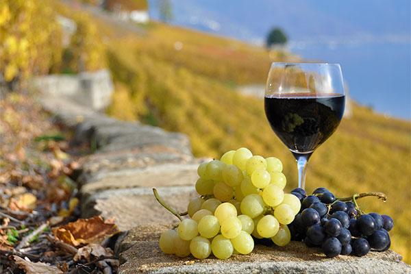 wineglass-grape-farm